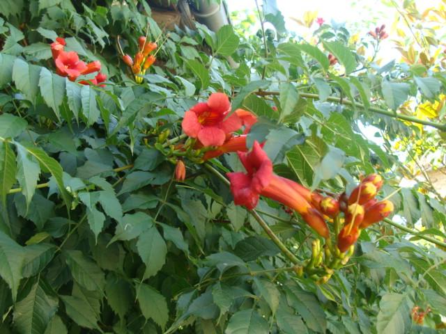 Bmdt forum de discussion identification d 39 un type de for Type de plante